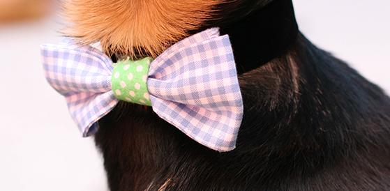 bow-tie