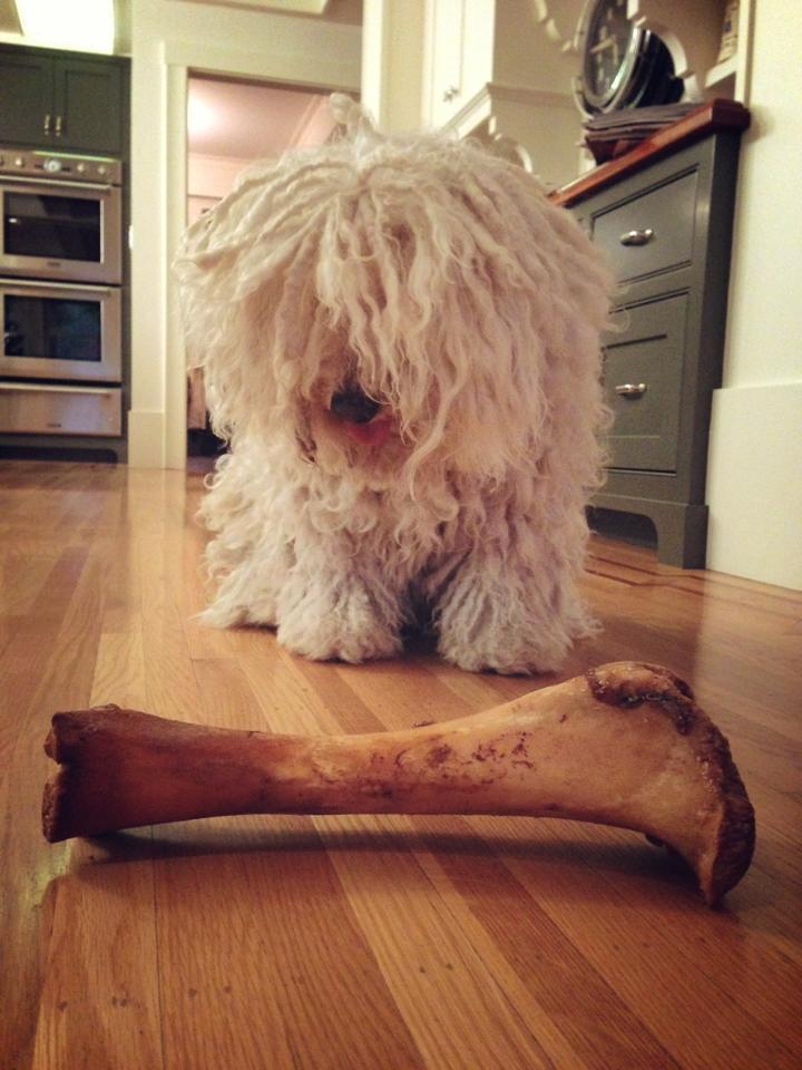 beast.the.dog